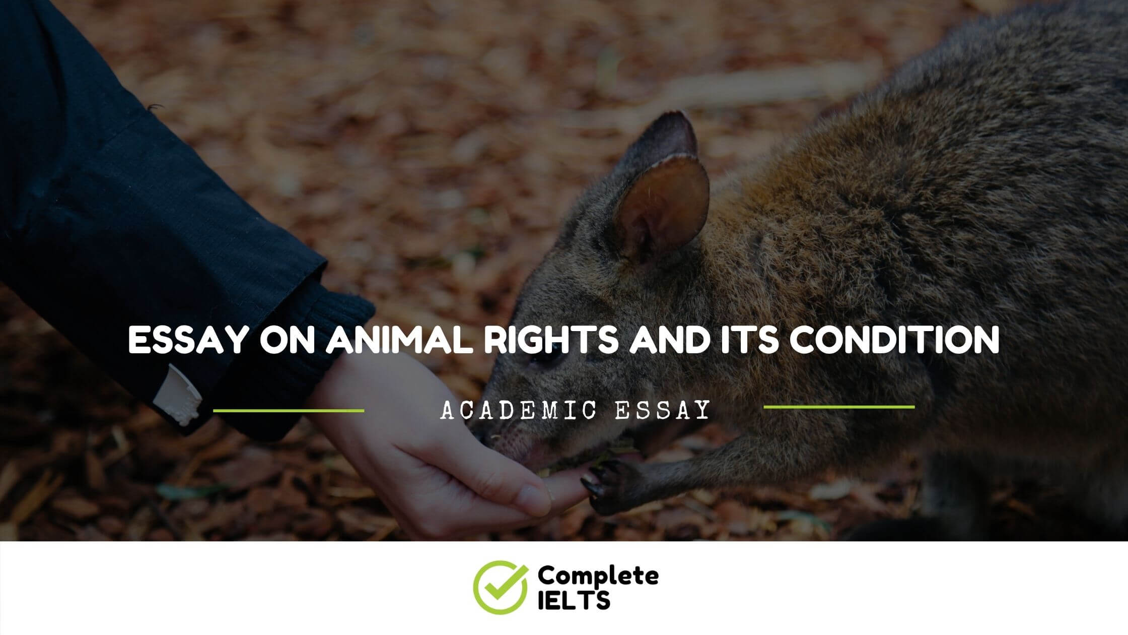 Essay on Animal rights and its condition